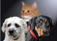 Humane Society of North Central Arkansas
